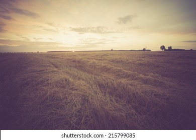 vintage photo of stubble field