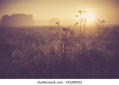 vintage photo of summer meadow at sunset.