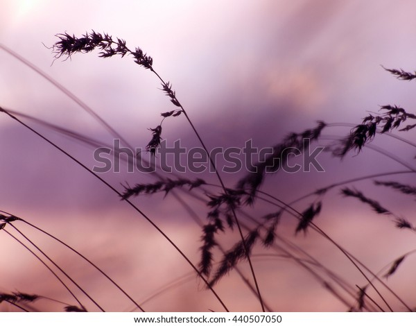 Vintage photo of sunset background with grass