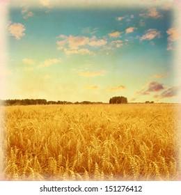 Vintage photo of wheat field under blue sky.