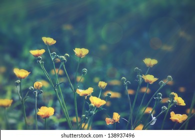 Vintage photo with wild flowers at dawn