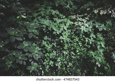 Vintage photography of green forest jungle after rain. Forest jungle background. Natural green jungle foliage. Outdoor landscape of green rain forest foliage, natural background photography