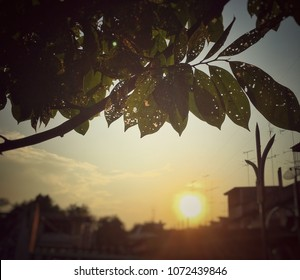 Vintage picture of burned leaves with sunset in background. Shiny sunshine during sunset. Small holes on the leaf burned by heat from strong sun light. Silhouette of branch and leaf in sunset.