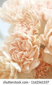 Vintage Pink Carnations Background Image
