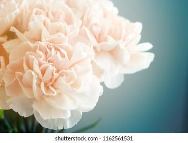 Vintage Pink Carnations on Blue Background