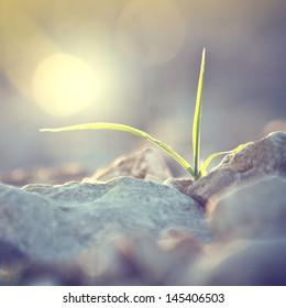 Vintage plant grows in rocks and symbolizes struggle