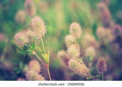 vintage plants background
