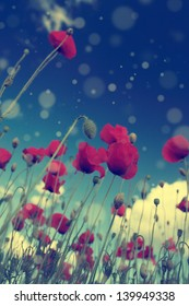 Vintage poppy with blue sky and bokeh