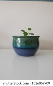 Vintage Pottery with plant