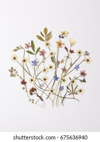 Vintage pressed dried flower decoration