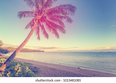 Vintage processing of a beautiful tropical beach scene with coconut palm and sunrise/sunset light