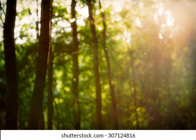 vintage retro blurred forest landscape with leaks and bokeh