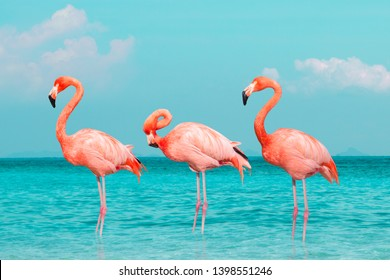 Vintage and retro collage photo of  flamingos standing in clear blue sea with sunny sky summer season with cloud.