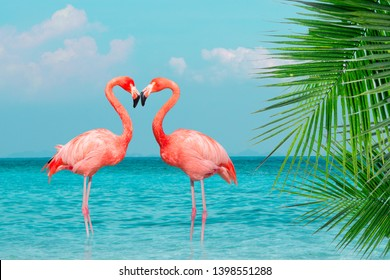 Vintage and retro collage photo of  flamingos standing in clear blue sea with sunny sky summer season with cloud and green coconut tree leaves in foreground.
