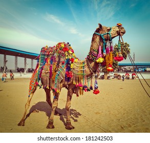 Vintage retro hipster style travel image of decorated camel at Pushkar Mela (Pushkar Camel Fair). Pushkar, Rajasthan, India