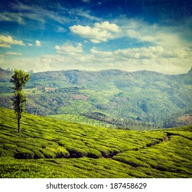 Vintage retro hipster style travel image of Kerala India travel background - green tea plantations in Munnar, Kerala, India - tourist attraction with grunge texture overlaid