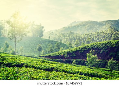 Vintage retro hipster style travel image of Kerala India travel background - green tea plantations in Munnar, Kerala, India in the morning on sunrise