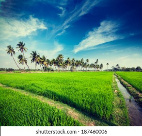 Vintage retro hipster style travel image of rural Indian scene - rice paddy field and palms. Tamil Nadu, India