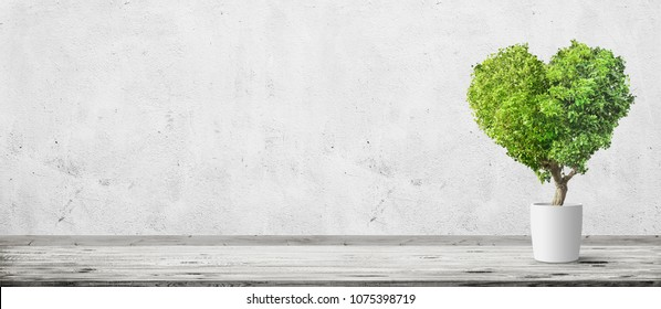 Vintage room interior with herat shaped plant in pot over concrete wall and wood floor background. Wide panorama image