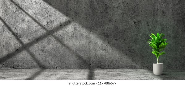 Vintage room interior with plant in pot over concrete wall and floor background. Wide panorama image