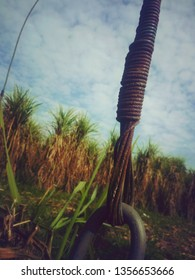 a vintage rusted electric wire in suger cane field