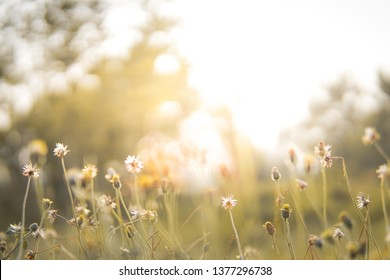 vintage soft focus of nature grass flower with warm sunlight at the morning in field, abstract background wallpaper and copy space