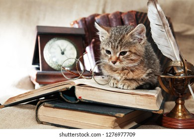 Vintage still life with lot of old things and books around nice kitten