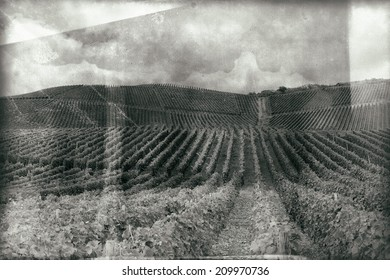 Vintage style black and white image of a Vineyard in Pfalz, Germany