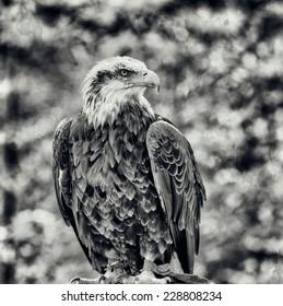 Vintage style image of a Bald Eagle