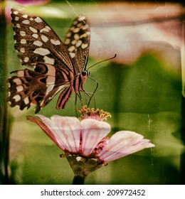 Vintage style image of a beautiful butterfly rests on a flower in the Lake Manyara National Park, Tanzania