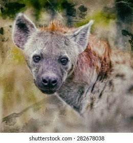Vintage style image of a spotted hyena in Kruger National Park, South Africa