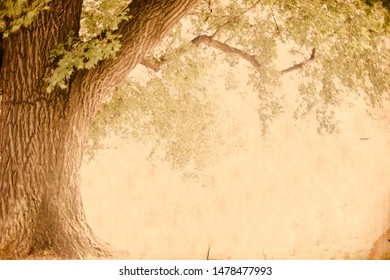 Vintage style image of tree with retro grunge textured effect