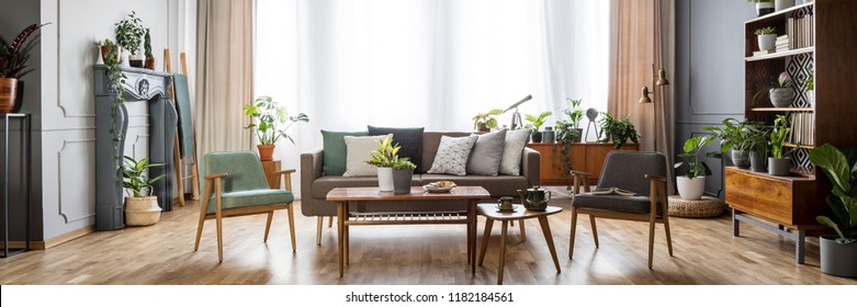 Vintage style living room interior with windows with curtains, grey and mint armchairs, sofa with pillows and many fresh plants