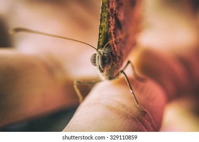 Vintage style photo of a curious butterfly sitting on a hand