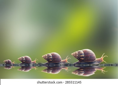 vintage style photo of snail family walking in line on water