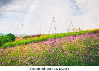 Vintage style photography of outdoor park of verbena flower field and local style giant swings.