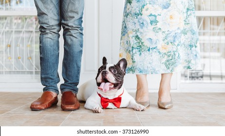 vintage style picture of a couple with their cute french bulldog for wedding day