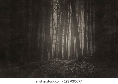 vintage style sepia photo of a dark forest - Shutterstock ID 1927095077