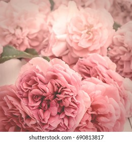 vintage stylized image of pink roses lying on white wooden background, with matte effect