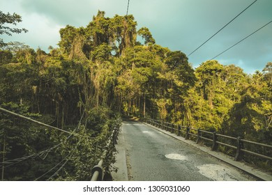 The vintage suspension bridge leading to the tropical forest. Stunning Asian landscape. The tourist road among the dense woods. The climbing lianas plants background. The cloudy rainy sky.