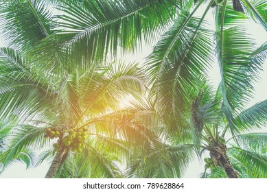 vintage tone of coconut tree and clear blue sky in background .