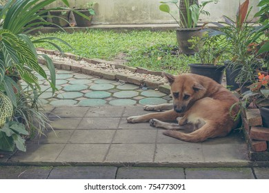 vintage tone image of brown stray dog beside the street on day time .