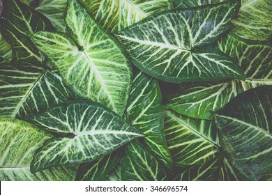 vintage tone of Texture of a green leaf. Green Leaf isolated background.