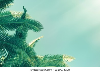 Vintage toned coconut palm tree with sunlight. Beam of light and leaves of palm in hot summer day.