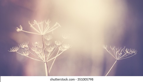 Vintage toned dry plant background, shallow depth of field, space for text.