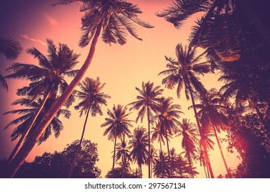 Vintage toned holiday background made of palm tree silhouettes at sunset.