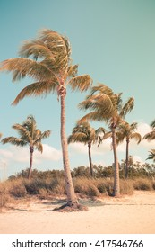 Vintage Toned image of Beautiful palm trees swaying in the breeze