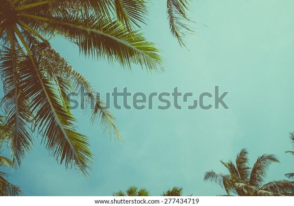 Vintage toned palm tree over sky background