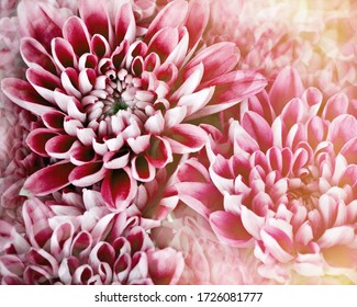 vintage toned pastel flower photo