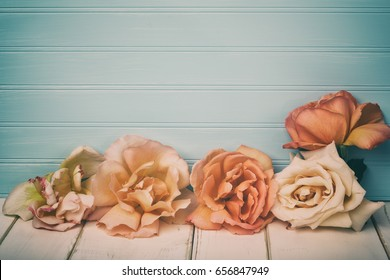 Vintage Toned Peach Roses on White Board Table and Against a Weathered and Teal Blue Shiplap Background with Room or Space for copy, text, your words or design.  It's horizontal with cross processing